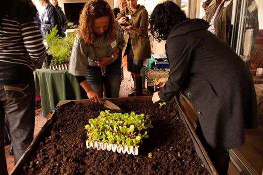 Bridget Kitley Herb Nursery and Potager Landscaping Stellenbosch