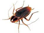 Fotos de Pest Control Technologies cc
